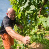 Des Weinbauers Kampf für den edlen Tropfen