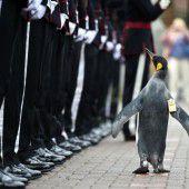 Ein schottischer Pinguin ist nun Brigadegeneral