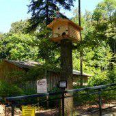 Waschbären im Wildpark Feldkirch ziehen bald um