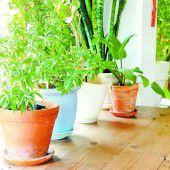 Sommerzeit für Zimmerpflanzen