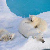 Grönland wieder mit Wärmerekord