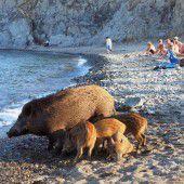Tierischer Besuch am Strand
