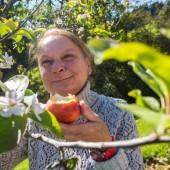 Der Herbst schützt nicht vor blühenden Apfelbäumen