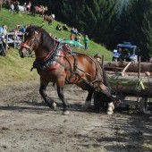 Fuhrmannstage auf der Alpe Büla