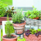 Gärtnern am eigenen Balkon
