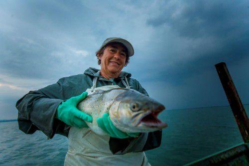 Berufsfischerin Erna Gasser hat heute einen seltenen Fang gemacht: Eine große Seeforelle ging ihr ins Netz. Foto: VN/Paulitsch