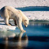 Meereis der Arktis taut erstmals bis Nordpol