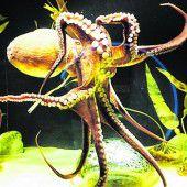 Aquarium: Das Mare Nostrum
