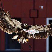 Adler jagen Drohnen im Dienste der Sicherheit