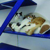 Tierschutzflohmarkt im Tierschutzheim