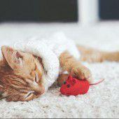 Di zwungno Katza musod it.