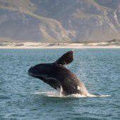 Kindergarten der Wale