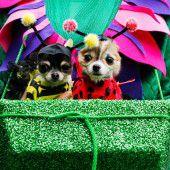 Hundeparade in New York