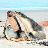 Naturschutz für die Seelöwen