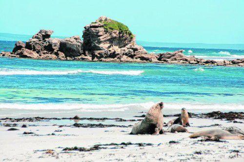 An den Stränden der Inseln tummeln sich nicht selten Robben. Fotos: shutterstock