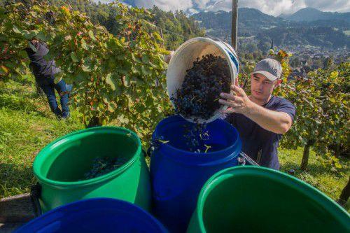 Biowein aus Röthis gibt es seit den 80er-Jahren im Weingut Nachbaur. Damit gehört der Betrieb zu den Pionieren der Biolandwirtschaft.Vn/Steurer