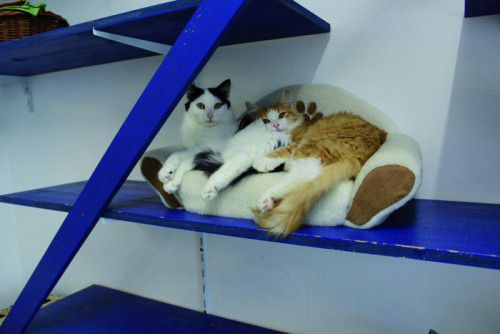 Die Tierheimkatzen profitieren von den Einnahmen des Flohmarkts.
