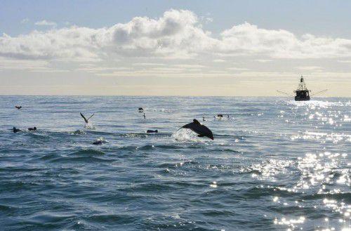 Gerade Delfine und Wale, die zur Orientierung auf ihr Gehör angewiesen sind, leiden unter dem Lärm. Foto: RTS
