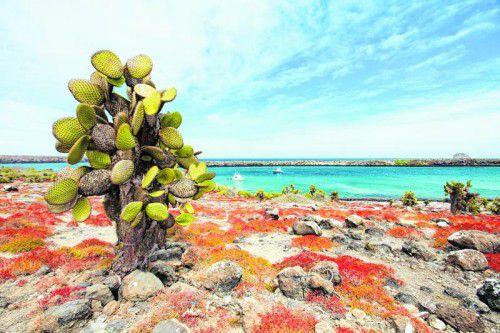 Nicht nur die Tiere, auch die Pflanzen auf den Galapagosinseln sind spektakulär. Fotos: shutterstock