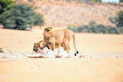 Während der heißen Zeit kommen die Tiere oft zum Wasserloch.