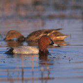 Gefährliche Art der Vogelgrippe
