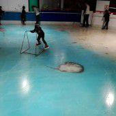 Eisfläche mit 5000 toten Fischen