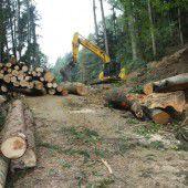 Steinschlagsicherung in Lochau Süd gestartet