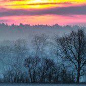 Klimawandel verändert die Schweizer Wälder