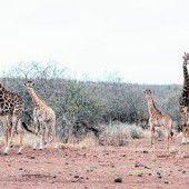 Abwechslung bei einer Safari in Tansania