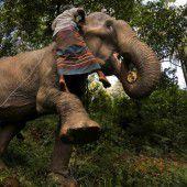 Kampf gegen illegale Elefantenhalter