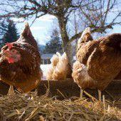 Sorge wegen der Vogelgrippe