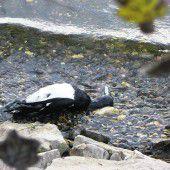 Weitere 50 tote Vögel am See angeschwemmt