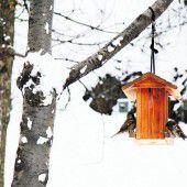 Der richtige Platz für ein Vogelhaus