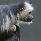 Nachwuchs im Affenhaus