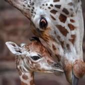 Großes Mutterglück