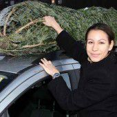 Der Christbaum im oder auf dem Auto
