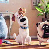 Tierische Filme haben die Nase vorn