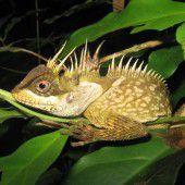 Forscher entdecken kurioses Artenkabinett