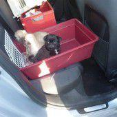 Hundewelpen illegal am Parkplatz verkauft