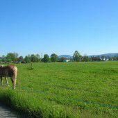 Umweltbeirat will die Grünzonen belassen