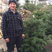 Gern im Weihnachtswald