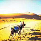 Touren in die Wüste