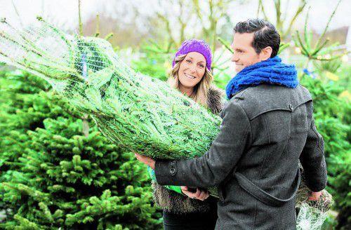 Nach dem Kauf sollte man den Baum am besten frostfrei im Freien lagern.