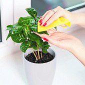 Die richtige Pflege für Zimmerpflanzen