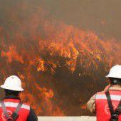 Großbrand zerstörte 50 Hektar Wald