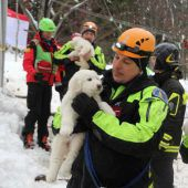 Hundewelpen fünf Tage nach Lawine gerettet