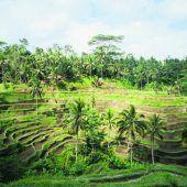 Reisterrassen als Kunstwerke