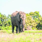 Heimat von 5000 Elefanten