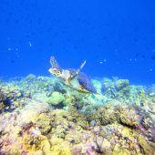 Bunte Unterwasserwelt ist Eldorado für Taucher