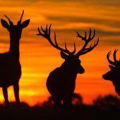 Jägerschaft über dem Soll